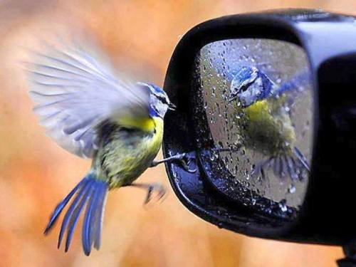 Aynadaki kuş