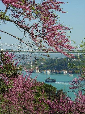 İstanbulda erguvanlar