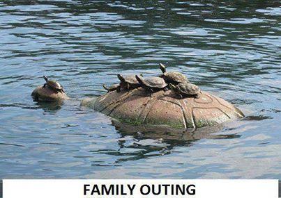 Kaplumbağaların aile gezisi