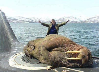 Rus denizaltısında uyuyan bir Denizaslanı