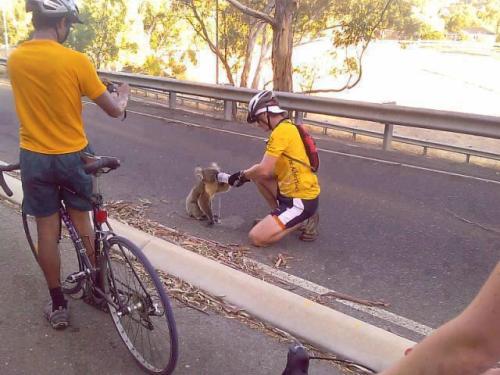 Susayan Koala