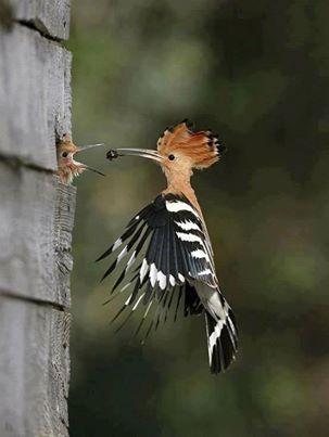 Yavrusunu besleyen kuş