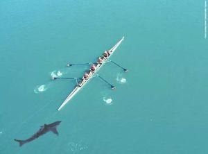 Köpek balığı kovalayınca