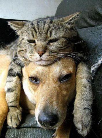 Başımın üstünde yerin var.