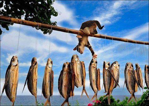 Bir kuru balık için bu kadar zahmet değer mi