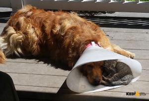 Hasta köpek ve kedi