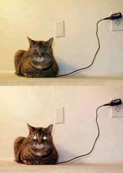 Kedi şarja bağlı