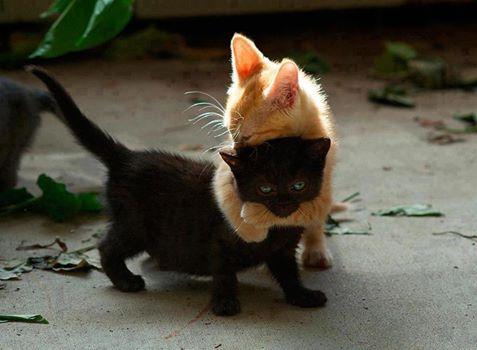 Kediler arası aşk