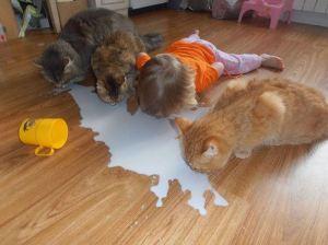 Süt dökmüş kedi